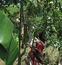 Coffee Farmers Associations